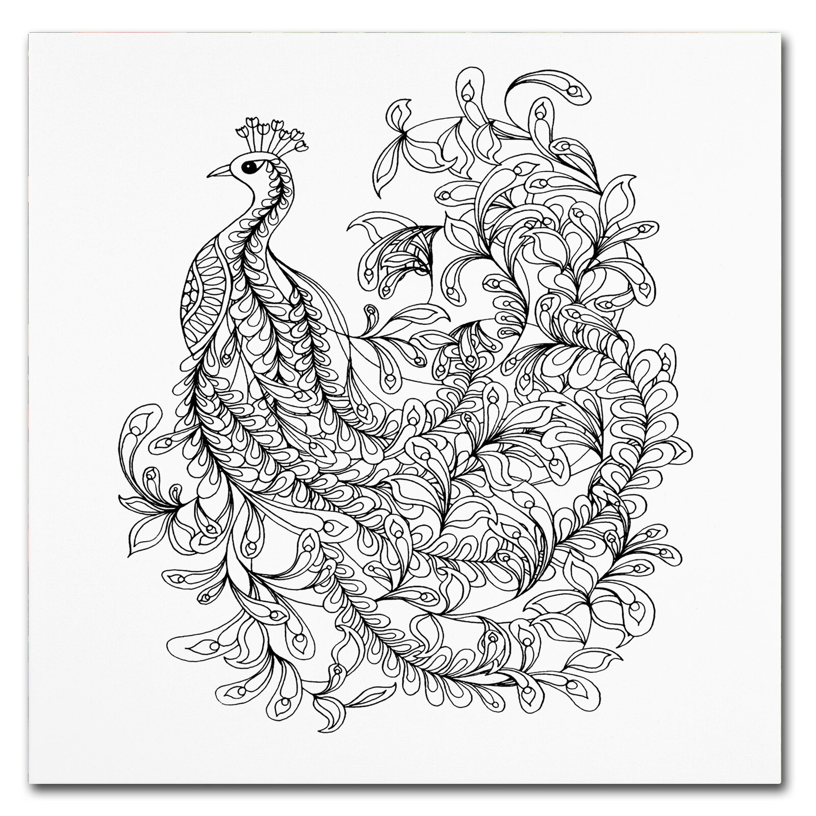 trademark art fancy peacock drawing print on wrapped canvas wayfair Miller House Conversation Pit