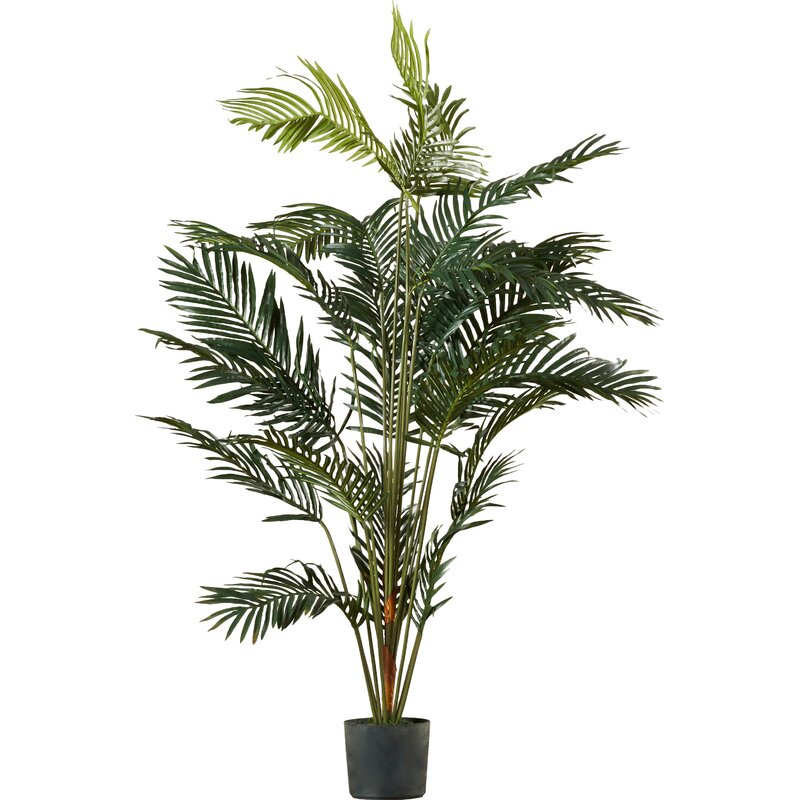 beachcrest home paradise palm tree floor plant in pot reviews