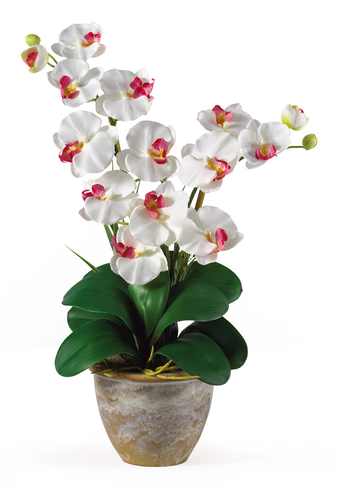 Nearly natural double phalaenopsis silk orchid flower in white nearly natural double phalaenopsis silk orchid flower in white reviews wayfair mightylinksfo