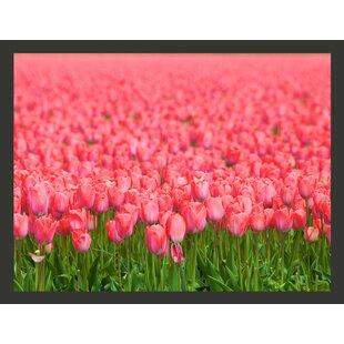 Pink Tulips 231cm x 300cm Wallpaper by Artgeist