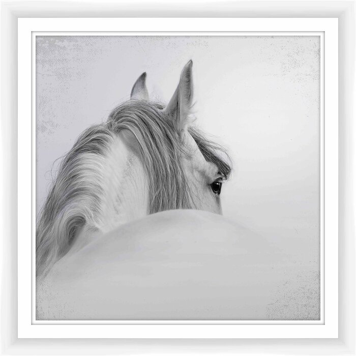 PTM White Horse Framed Photographic Print | Wayfair.ca