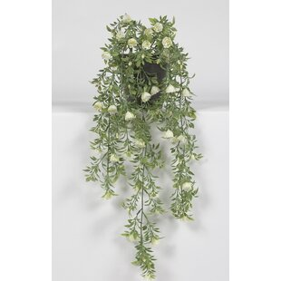 Rose Hanging Plant in Pot by Wildon Home