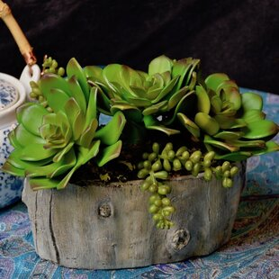 Centerpiece Desktop Succulent And Sedum Vine Plant In Planter