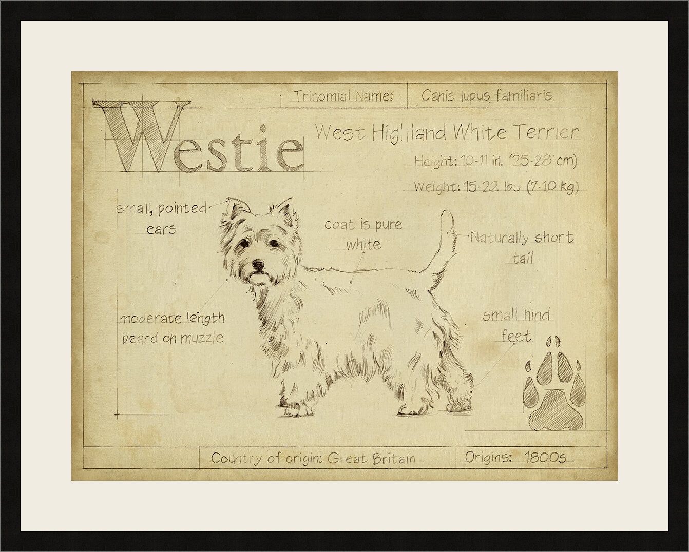 Ashton Wall Décor LLC \'Antique Westie\' Framed Graphic Art Print ...