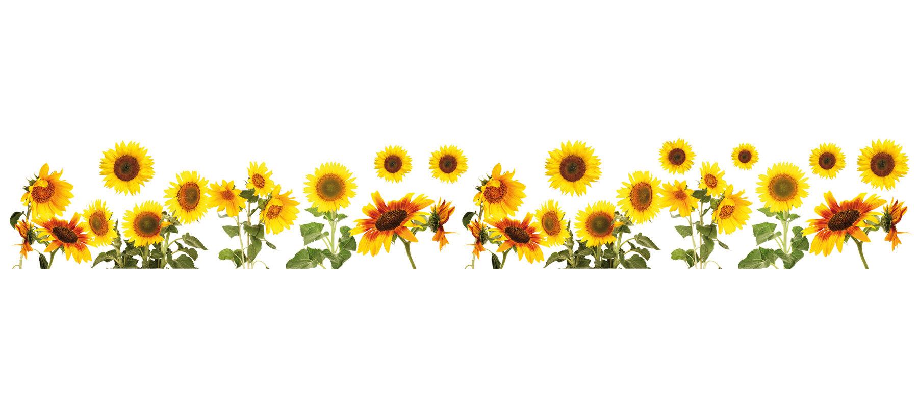 WallPops! Sunflowers Border Wall Decal & Reviews | Wayfair