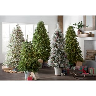 Snowy Frosted Green/White Fir Artificial Christmas Tree with 450 Clear/White Lights
