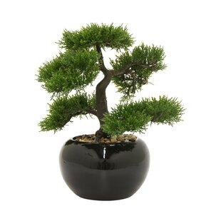 https://secure.img2-fg.wfcdn.com/im/03242129/resize-h310-w310%5Ecompr-r85/4174/41746802/faux-desktop-bonsai-plant-dans-le-pot.jpg
