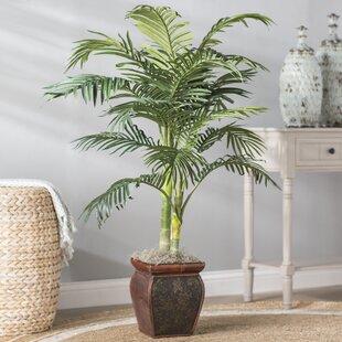 Palm In Decorative Vase