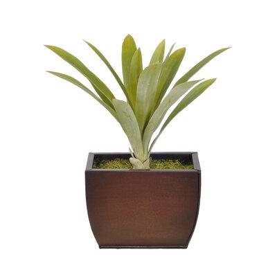 Pampas Grass Floor Vase