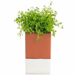 Nahant Evergreen Herb Pot Planter