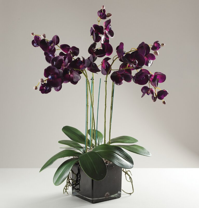 babylon london kunstpflanze phalaenopsis orchidee in vase bewertungen. Black Bedroom Furniture Sets. Home Design Ideas