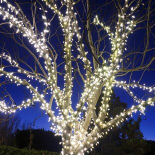 Compare & Buy 105 ft. 225-Light Wide Angle LED Mini String Light Touch of ECO