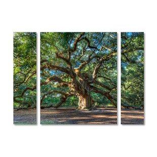 3 piece wall art youll love wayfair angel oak charleston 3 piece photographic print on wrapped canvas set gumiabroncs