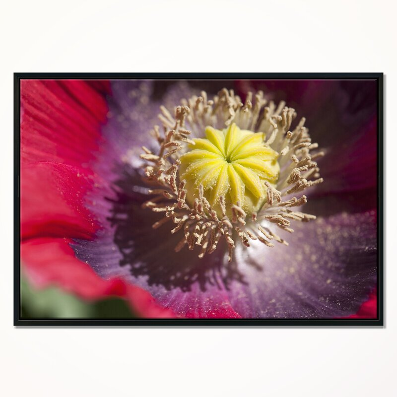 East urban home colorful opium poppy flower photo framed colorful opium poppy flower photo framed photographic print on wrapped canvas mightylinksfo