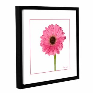 Pink Gerbera Daisy Framed Photographic Print On Gallery Wred Canvas