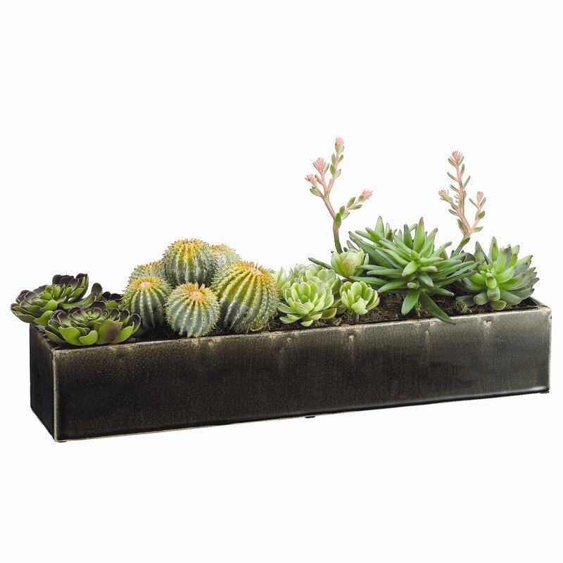 Succulents Floor Plant In Planter