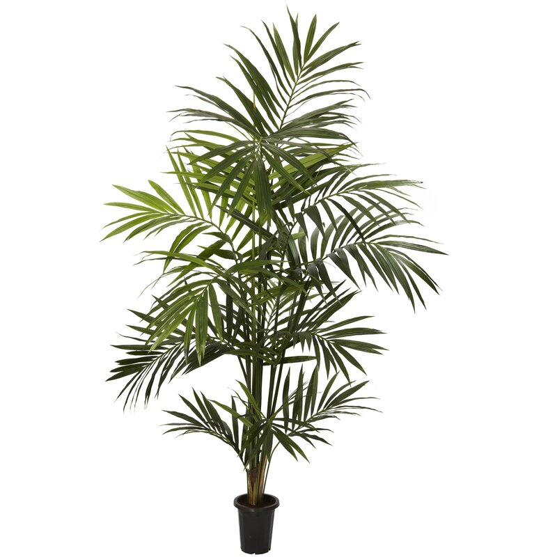 entracing palm tree type house plant. Kentia Palm Tree in Pot Nearly Natural  Reviews Wayfair