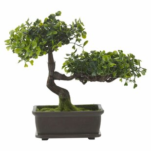 Bonsai Plant in Pot by World Menagerie