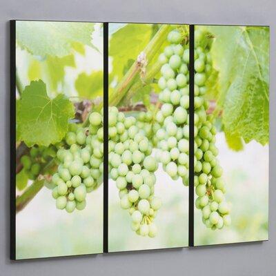 Ensemble impression photographique vert vigne raisin 3 pièces