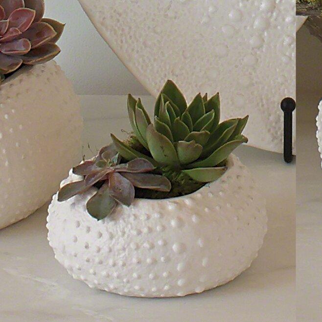 Global Views Warehouse Dallas: Global Views Ceramic Urchin Decorative Bowl & Reviews
