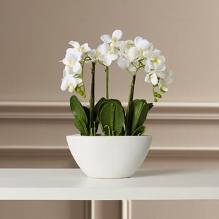 Artificial orchids youll love wayfair phalaenopsis silk flowers in pot mightylinksfo