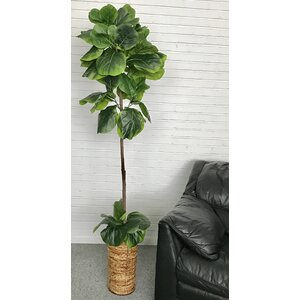 Fiddle-Leaf Fig Palm Tree in Basket