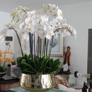 b819e57c0e Phalaenopsis Orchids Floral Arrangement and Centerpiece in Planter
