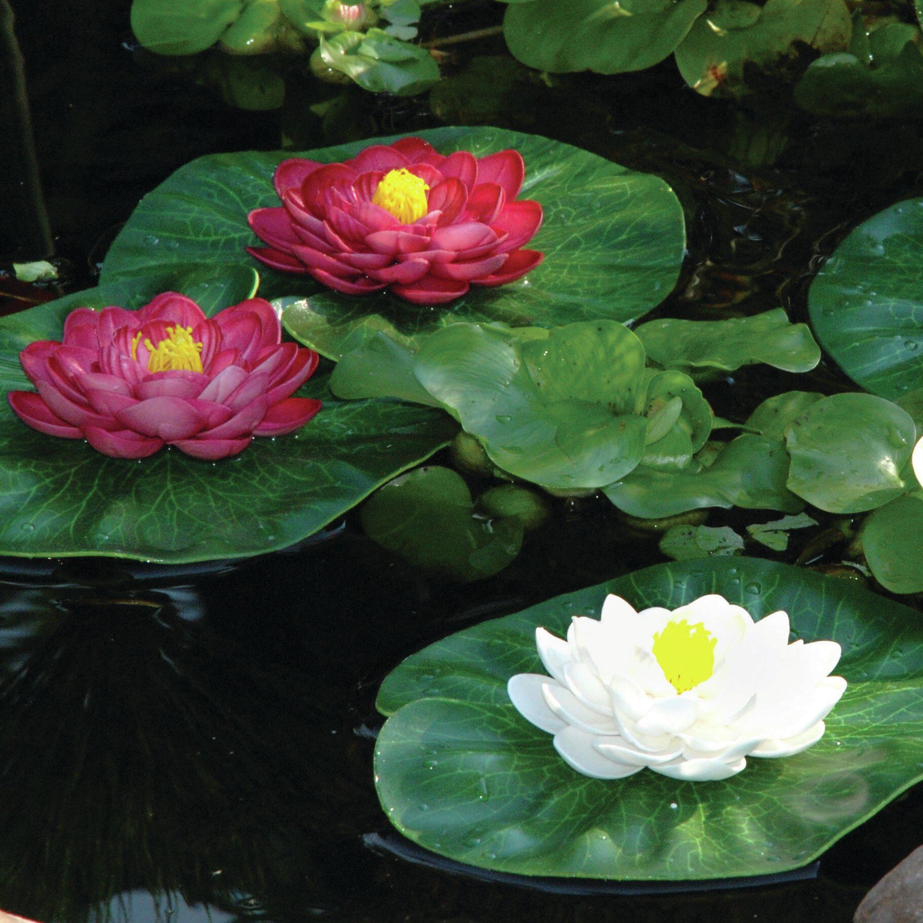Pond boss 3 piece floating lily pad set reviews wayfair izmirmasajfo