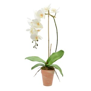 Phalaenopsis Orchid with Bamboo Floral Arrangements in Vase