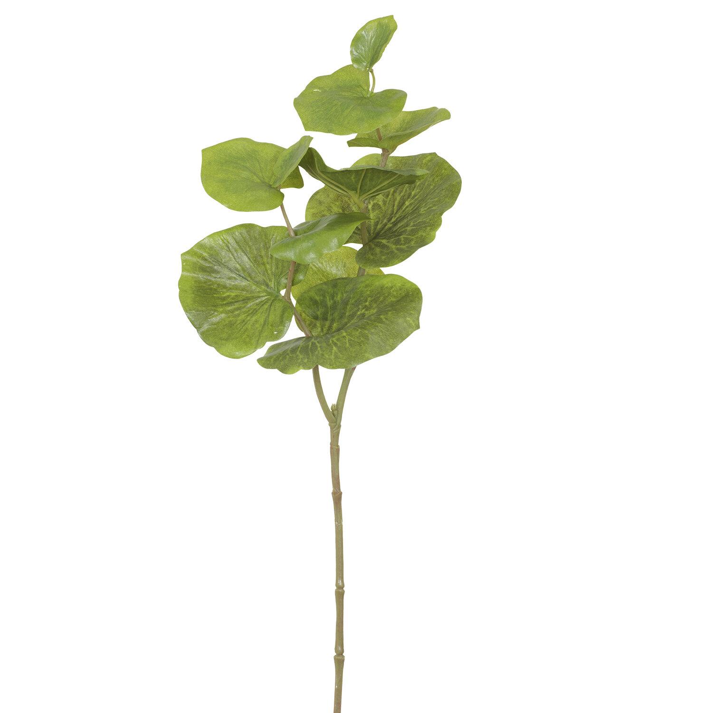 Succulent Foliage Branch