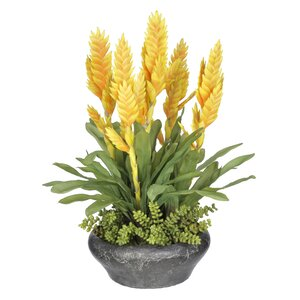 Bromeliad Floral Arrangement in Planter