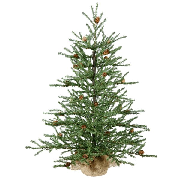 potted christmas trees youll love wayfair - Small Live Christmas Trees In Pots