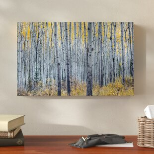 Forest Of Aspen Trees Photographic Print On Wred Canvas