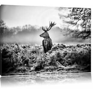 Proud Stag Wall Art On Canvas