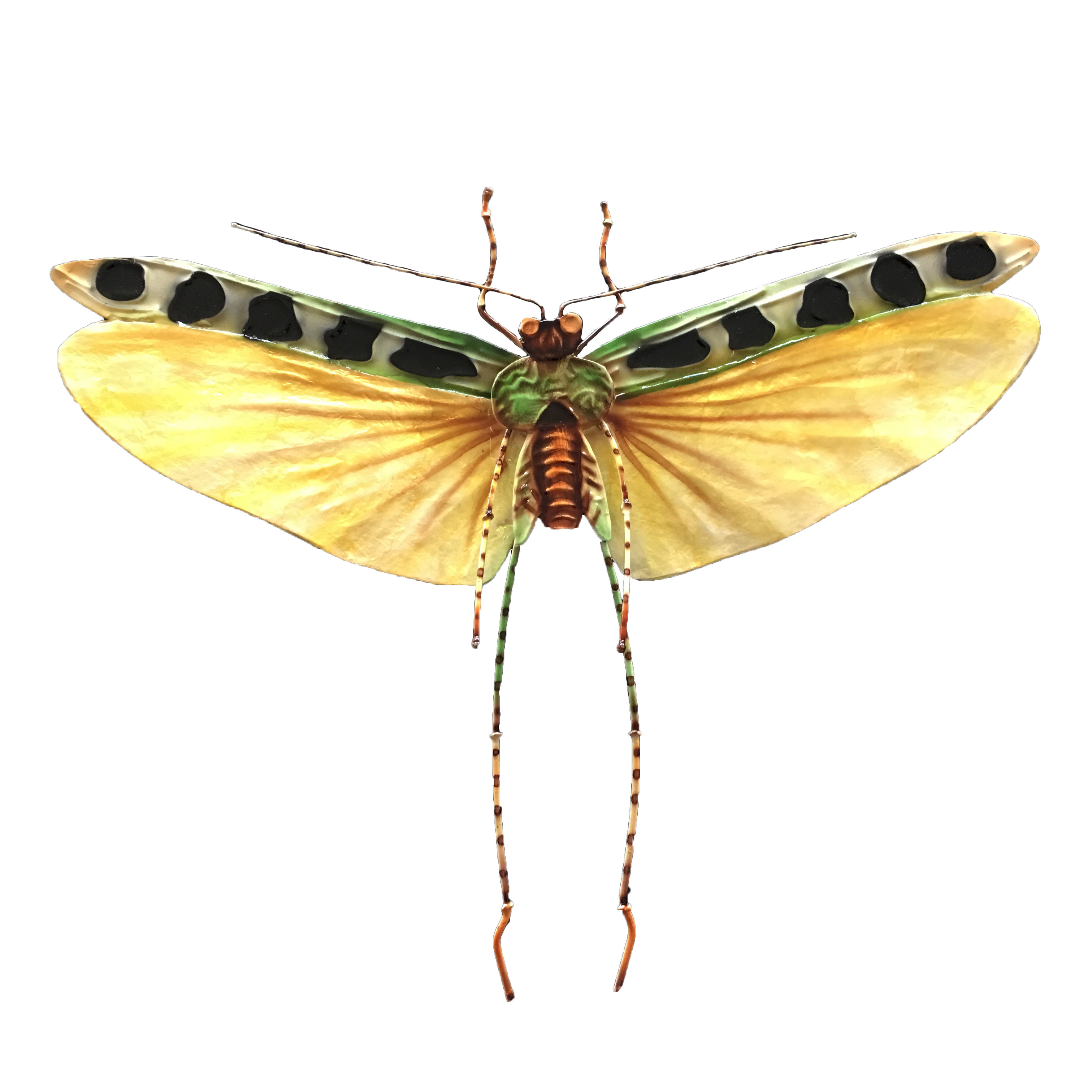 Fine Insect Wall Art Picture Collection - Wall Art Collections ...