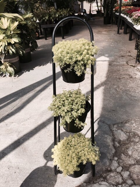 2f1593f21ae5 Artscapes Herb Garden Etagere Plant Stand & Reviews | Wayfair