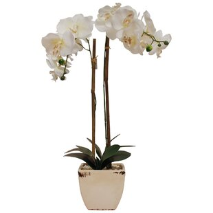 Faux Phalaenopsis Orchid Fl Arrangement In Pot