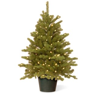 hampton 3 green spruce artificial christmas tree with 100 clear lights - Potted Christmas Tree