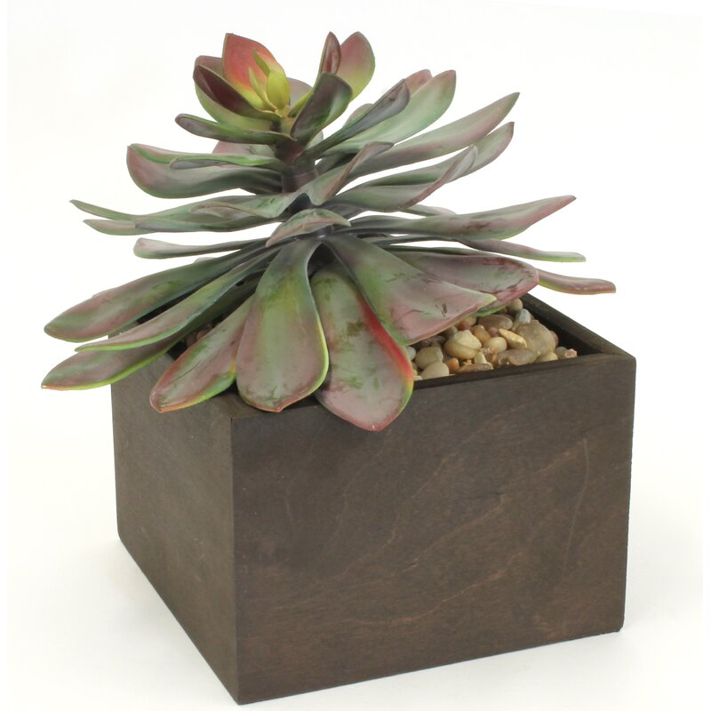 17 Stories Flower Succulent Plant in Planter