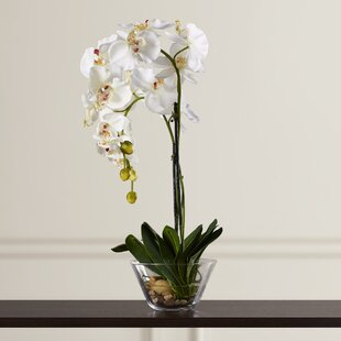 Brand-new White Orchid Arrangements | Wayfair BN27