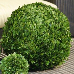 preserved boxwoods ball topiary - Wayfair Hot Tub
