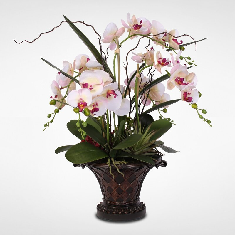 Bayou Breeze Silk Phalaenopsis Orchid With Artificial Succulents