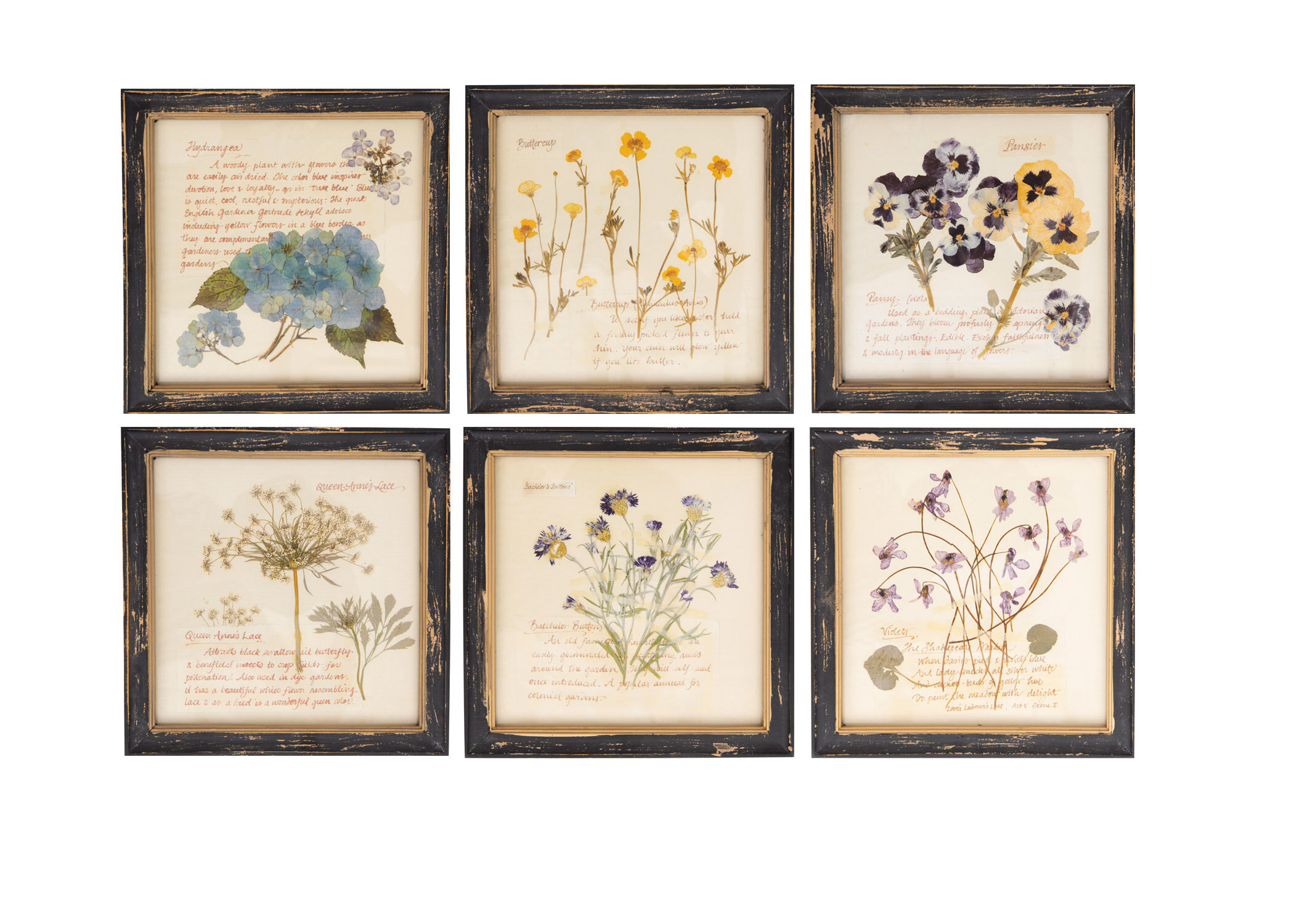 6b09ff9665a  Pressed Flowers  6 Piece Framed Graphic Art Print Set on Wood   Reviews