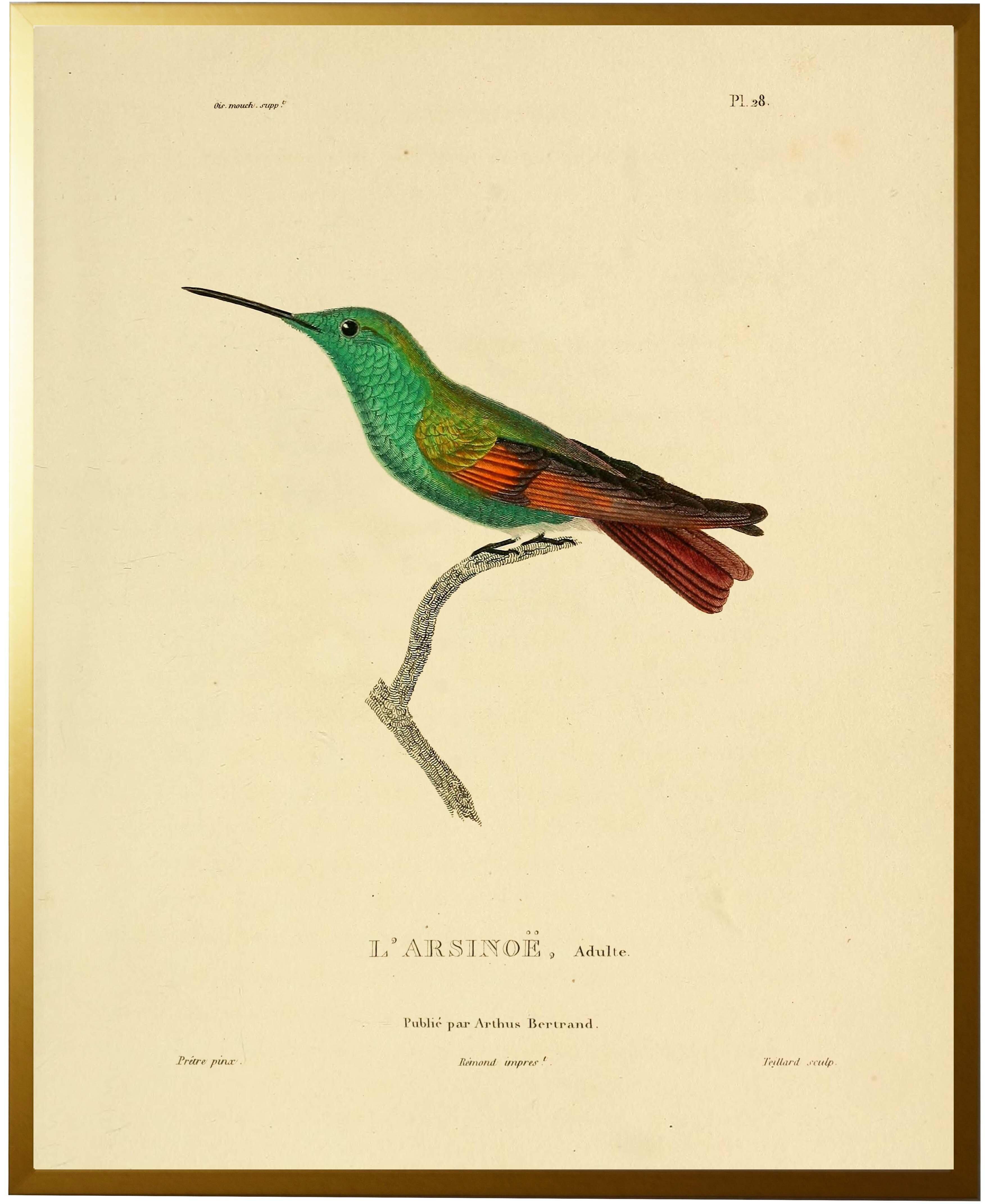 Bloomsbury Market \'Hummingbird Plate 28\' Framed Graphic Art Print ...