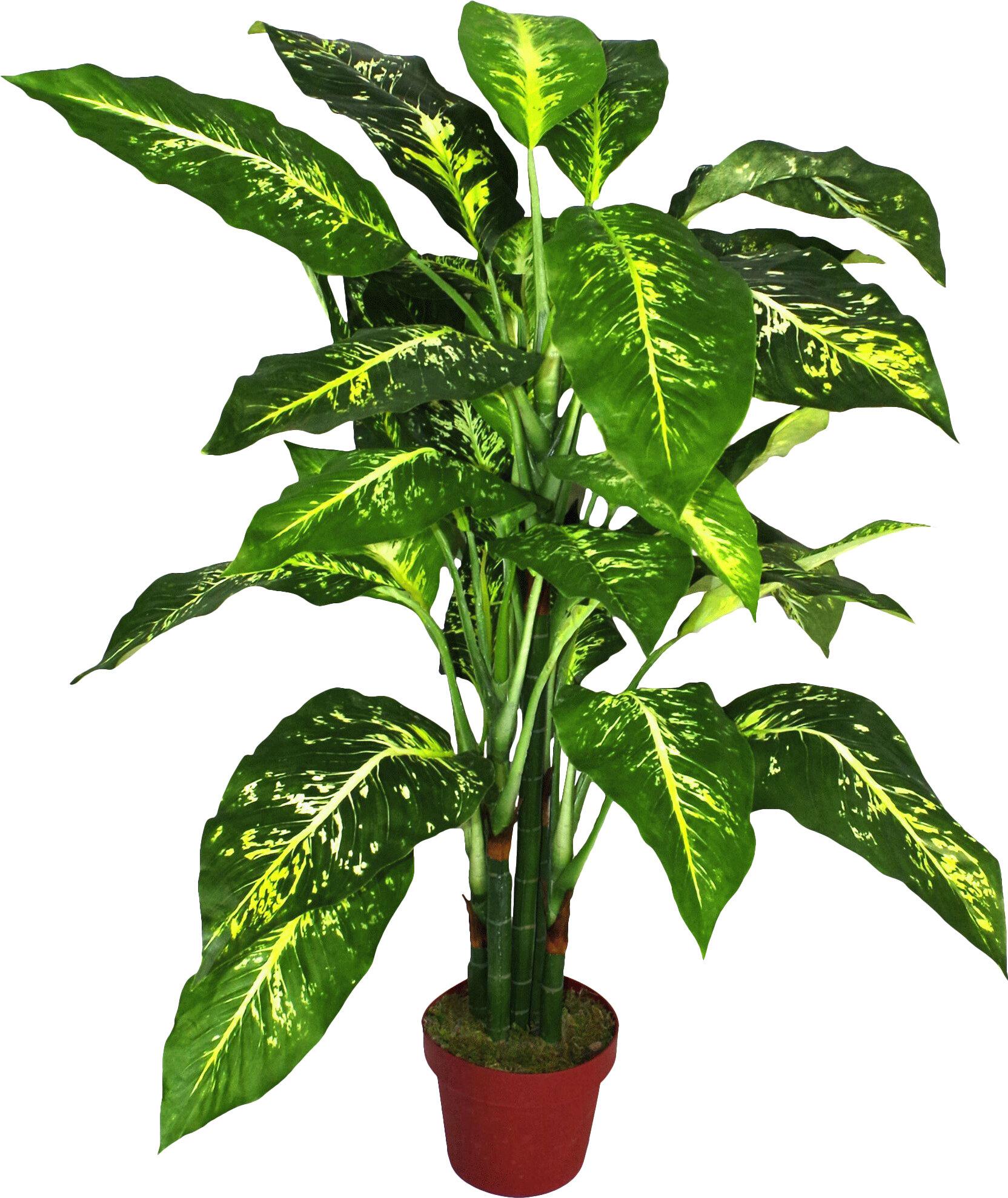 Artificial Aglaonema Costatum Plant