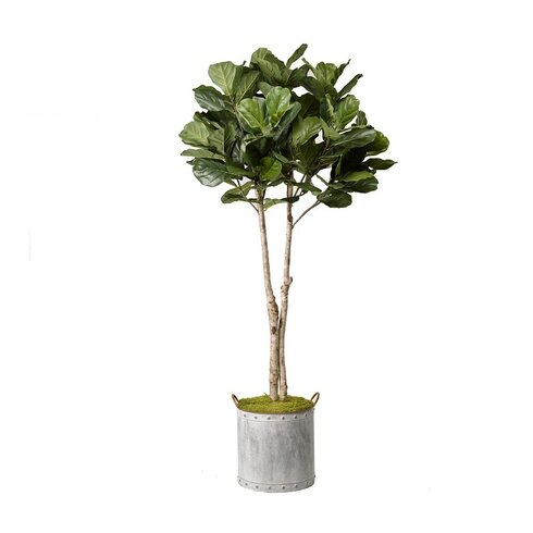 fiddle leaf fig tree foliage plant in planter - Fiddle Leaf Fig Tree