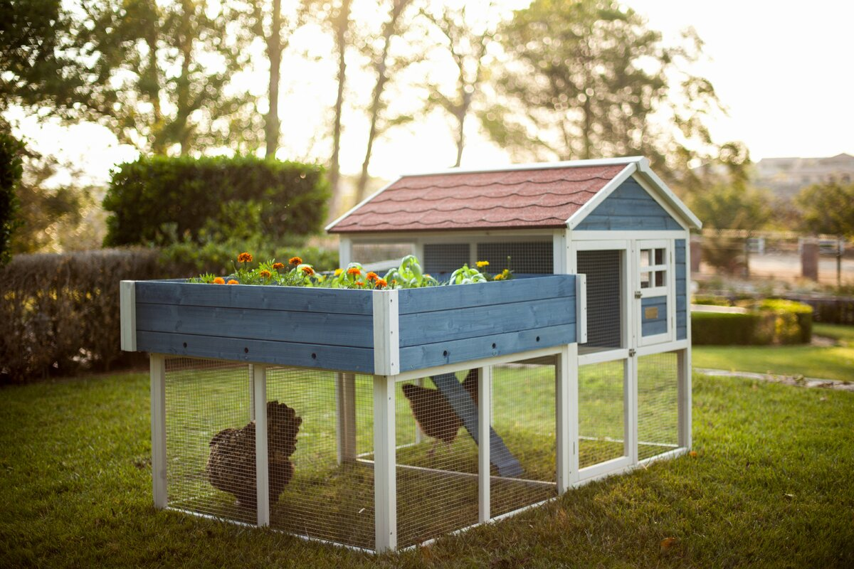 Nice The Rooftop Garden Chicken Coop