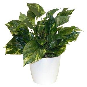 Modern & Contemporary Indoor Floor Plants | AllModern