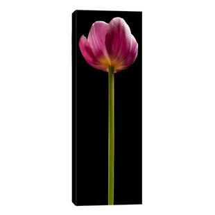 Tall Purple Tulip By Barry Seidman Photographic Print On Wred Canvas