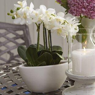 Faux flowers joss main phalaenopsis silk flowers in pot mightylinksfo